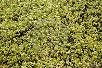 Moss in the Himalayas