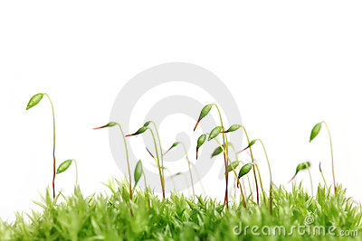 Moss isolated