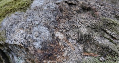 Moss and lichen on the rock. Camera in motion stock footage