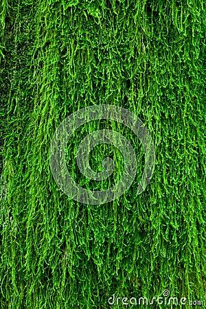 Free Moss On A Tree Bark Royalty Free Stock Photo - 19443655