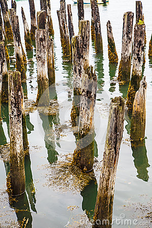 Free Moss On Old Pilings Royalty Free Stock Photos - 42234848