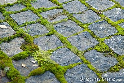 Moss on paving