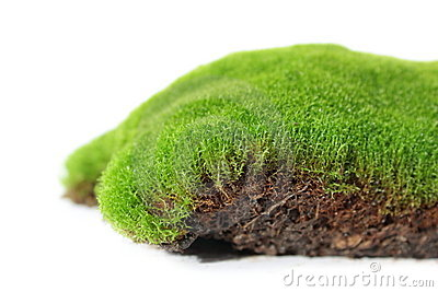 Moss, Plant Royalty Free Stock Image - Image: 19561436