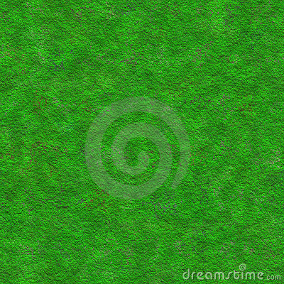 Moss plant surface