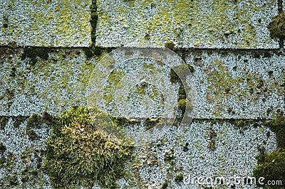 Moss on shingles