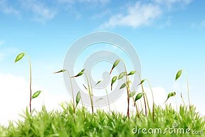 Moss with sky