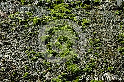 Moss Stone Wall