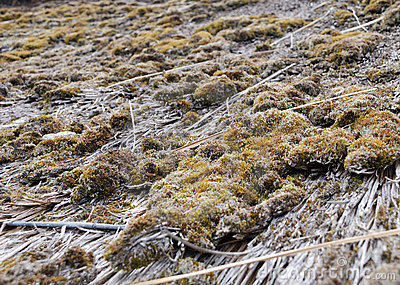 Moss and straw