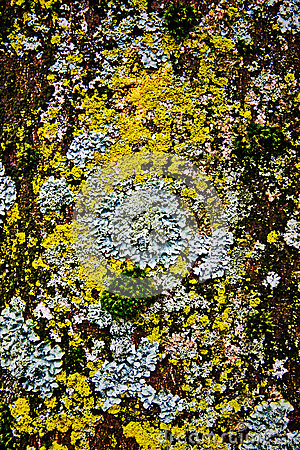 Moss on tree s surface