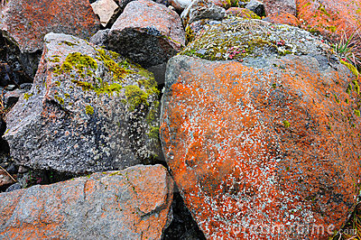 Mosses on stones