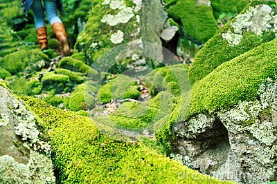 Mossy large rocks in the forest