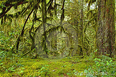 Mossy Oak Forest Haven HDR