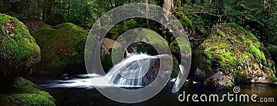 Mossy rocky river