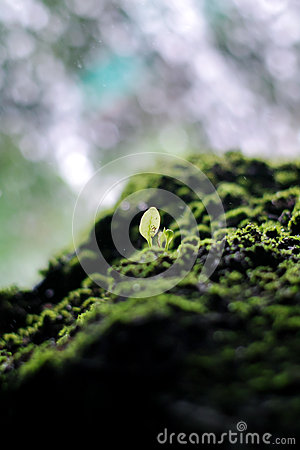 Free Mossy Stone And Young Green Plant With The Waterfall Background Stock Image - 36020801
