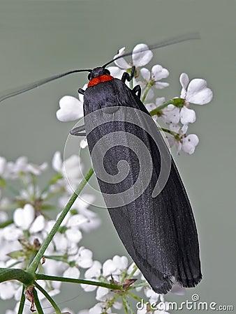 Free Moth Stock Photography - 23054502