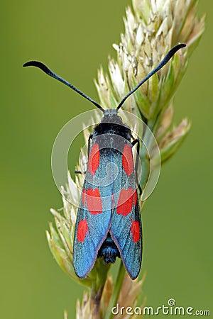 Free Moth Royalty Free Stock Photo - 27307235