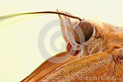 A moth head close-up