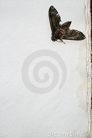 Moth On Old Paper