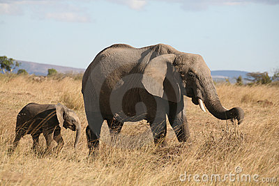 Mother and baby elephant walking through the grass