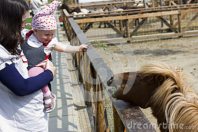 Mother and baby feeding the pony