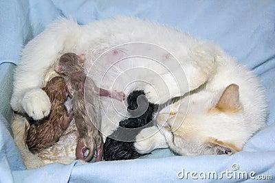 Mother cat feeding their newborn children