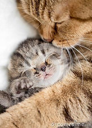 Free Mother Cat Hugging Kitten Royalty Free Stock Image - 35665616