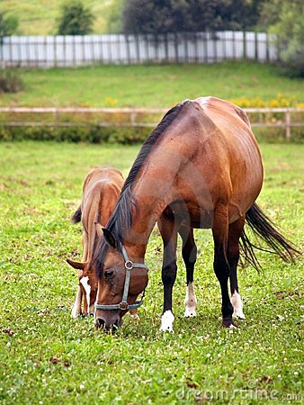 Mother and child grazing