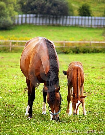 Mother & child grazing