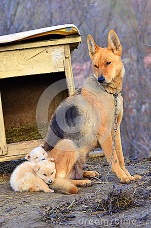 Free Mother Dog And Puppies Royalty Free Stock Images - 28203869