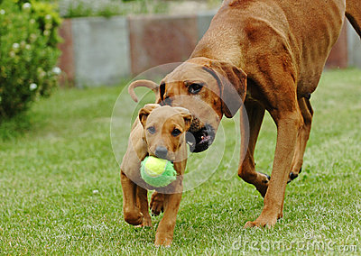 Mother and her puppy playing