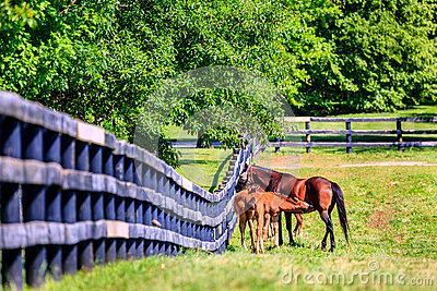 Mother horse and foals