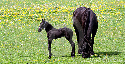 Mother horse and her baby