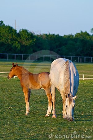 Free Mother Horse With Colt Stock Photo - 5213020