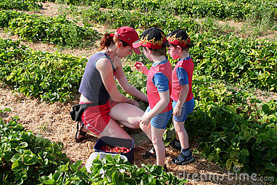 Mother picking strawberries with her sons