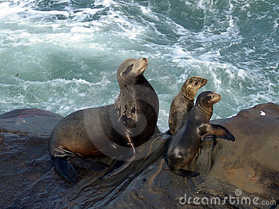 Mother seal and pups