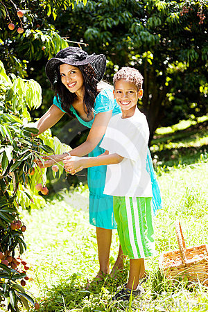 Mother and son picking litchis
