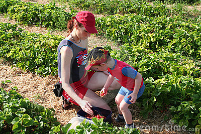Mother and son picking strawberries2
