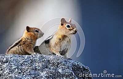 Mother squirrel