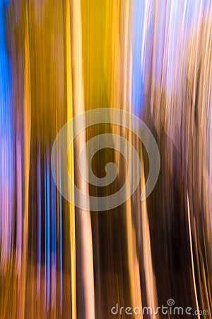 Free Motion Blur Forest Effect Stock Photography - 119117932