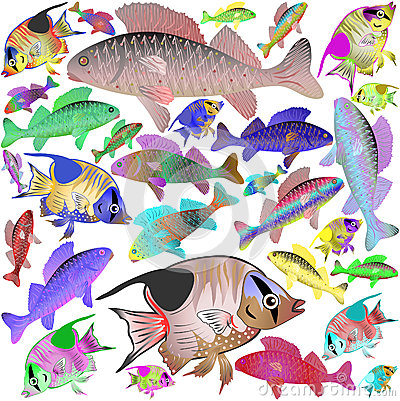 Motley sea fishes