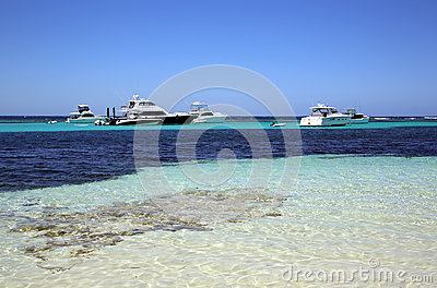 Rottnest Island Editorial Stock Photo