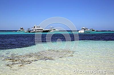 Rottnest Island Editorial Stock Photo