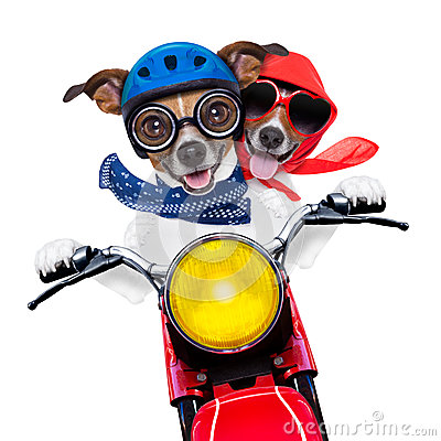 Free Motorbike Couple Of Dogs Royalty Free Stock Images - 37738929