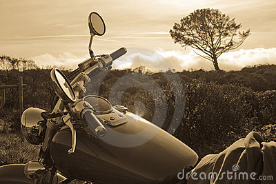 Motorcycle and Tree