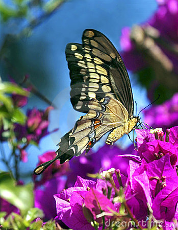 Motylia wiosna