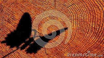Motyliego cienia drzewny karcz nikt hd materia? filmowy zdjęcie wideo