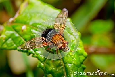 Mouche rouge sur une lame dans la forêt humide