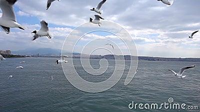 Mouettes volant dans le jour nuageux de ciel banque de vidéos