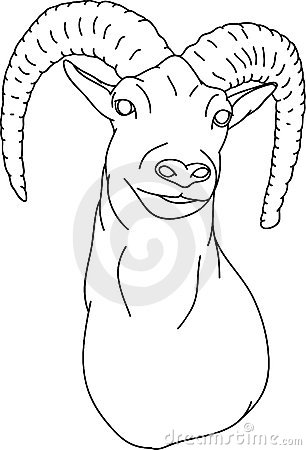 Free Mouflon Stock Photography - 14861032