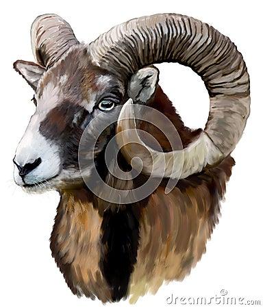 Free Mouflon Royalty Free Stock Images - 23967989